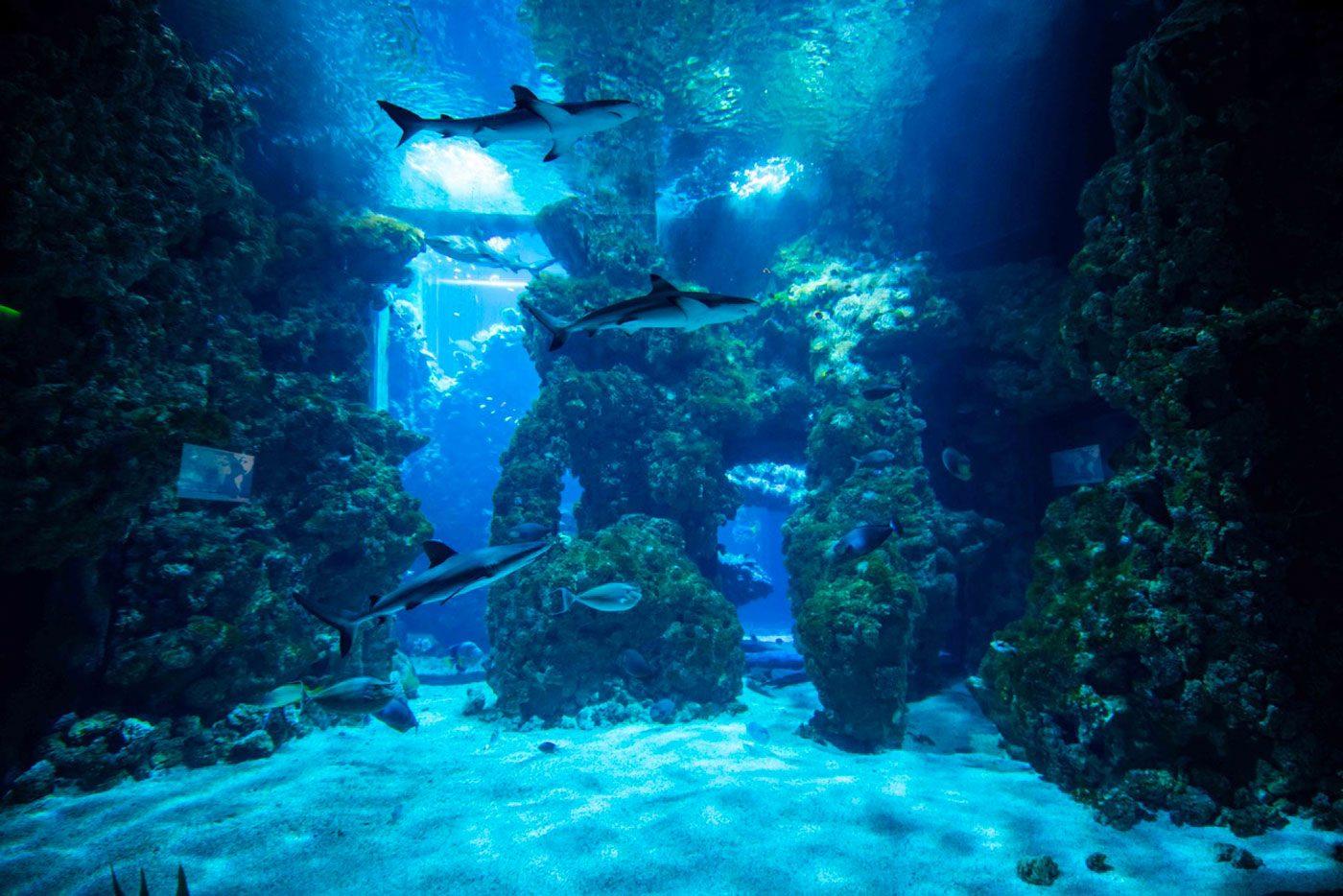Lagon-aux-requins